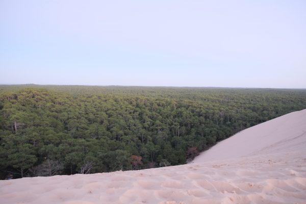 La dune et la forêt un décors assez surréaliste
