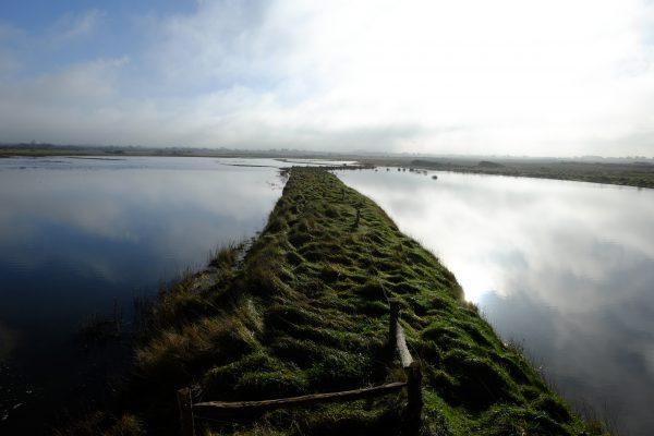 Le Marais Blanc, le Parc régional du Cotentin et du Bessin