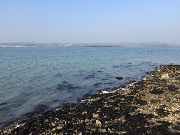 Saint-Vaast La Hougue est le plus ancien bassin ostréicole de Normandie