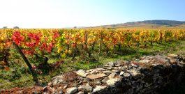 Les couleurs d'automne dans les climats de Bourgogne