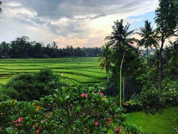 L'Indonésie, l'un des plus beaux pays du monde