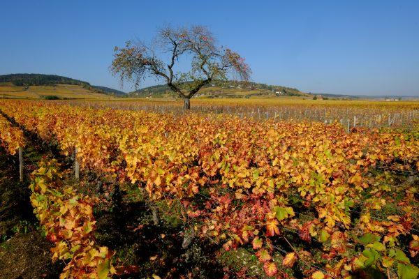 L'automne le meilleur moment pour découvrir les vignes et la Côte d'or