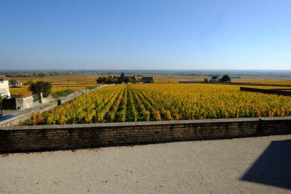 Les vignes, la Bourgogne, la vie