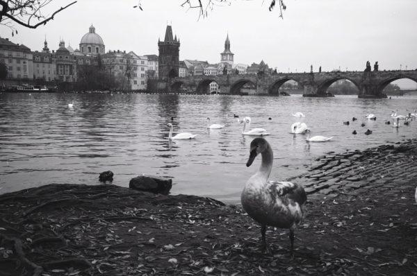 Prague, le Danube et le pont Saint-Charles en République Tchèque