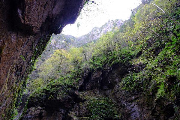 A flanc de falaise la nature reprend ses droits Gorges de Kakuetta