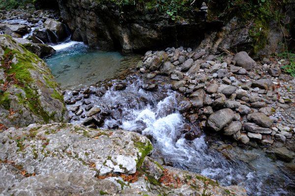 Au fin fond des Pyrenées Atlantiques se cache la jungle du pays basque
