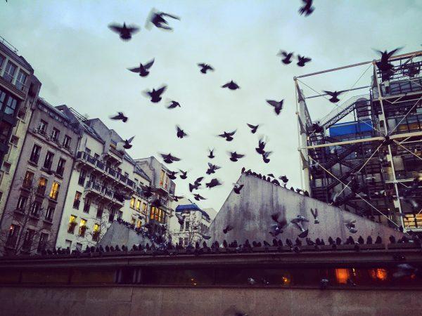 Des pigeons sur l'esplanade du musée Georges Pompidou