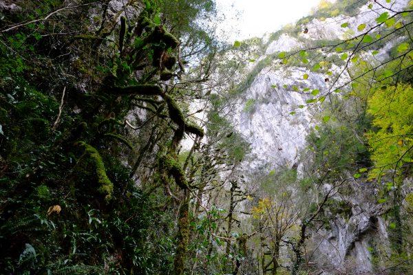 Kakuetta, la jungle du pays basque