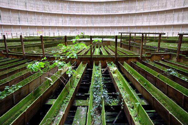 La végétation semble vouloir reprendre ses droits dans la tour abandonnée de Charleroi