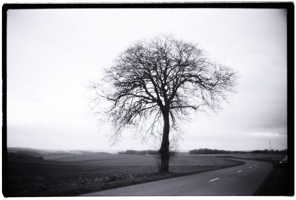 Un arbre déplumé au bord d'une route dans l'Oise