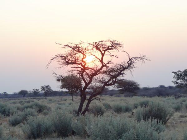 Un splendide coucher de soleil sur la savane en Namibie, l'un des plus beaux pays d'Afrique