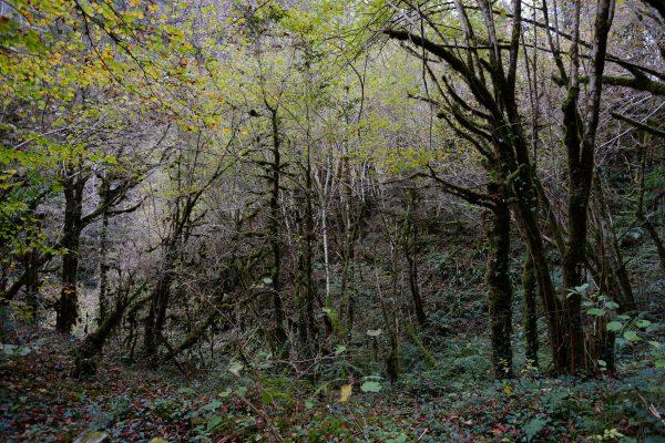 Une petite forêt marque l'entrée des gorges de Kakuetta