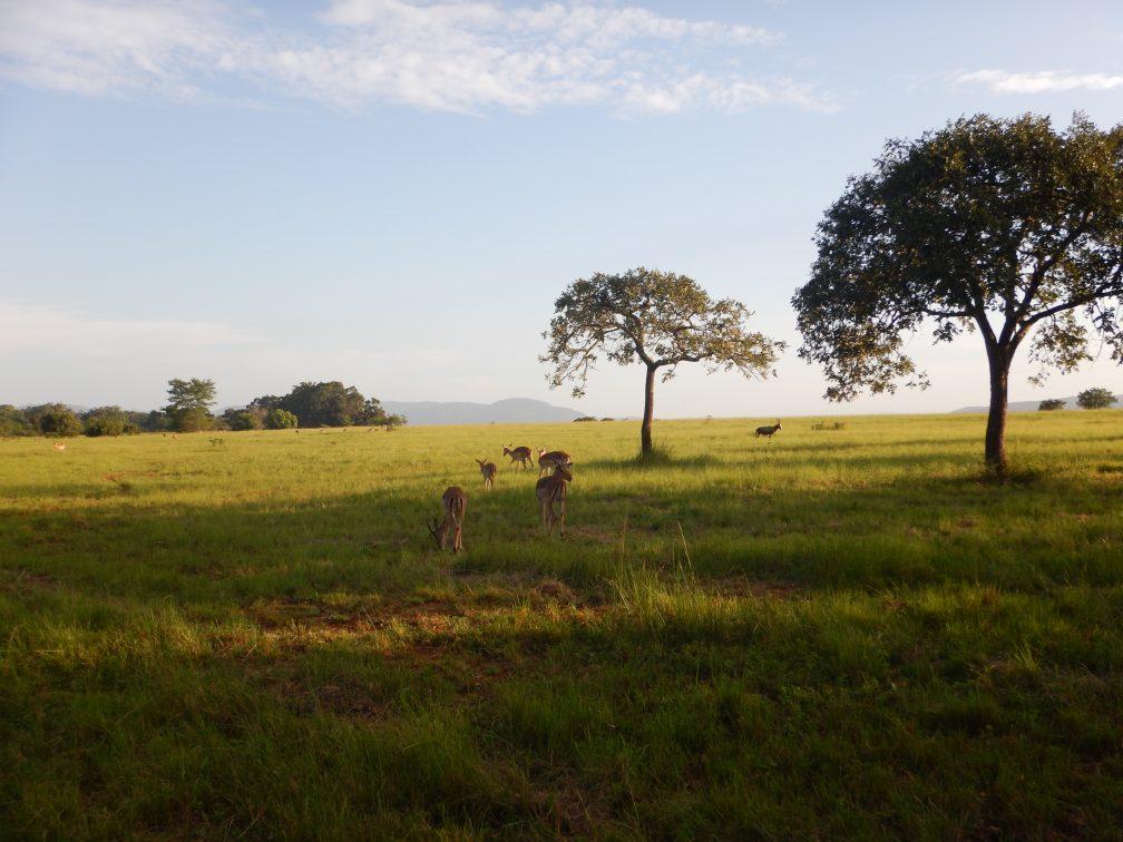 Voyage à la rencontre d'animaux sauvages en Afrique du Sud