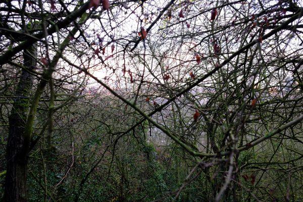Dans les bois à la recherche du teril des piges