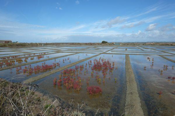 Les marais salants à Guérande un site remarquable entre ciel et mer