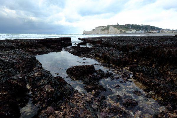 Promenade à marée basse sur les rochers à Etretat