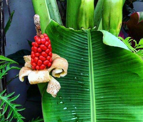 Une végétation luxuriante sur l'île de Bali