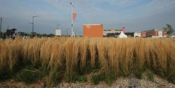 Insolite, un champ de blé installé dans le port du Havre
