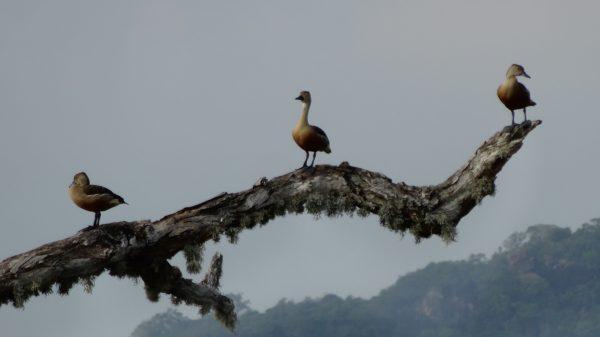 Rencontre dans un parc naturel au Sri Lanka
