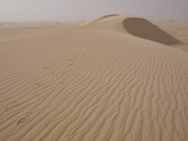 A la rencontre avec le désert en Egypte