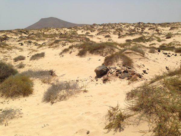 Balade dans les dunes du nord de Fuerteventura