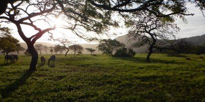 La Savane en Afrique du Sud