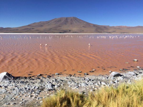 La laguna colorada, l'un des lacs les plus colorés du monde