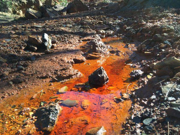 Un filet d'une eau rouge et très acide serpente dans la forêt.