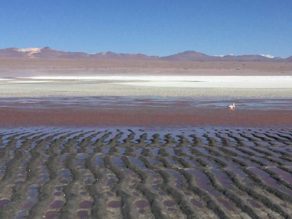 Un lac rouge perdu quelque part au milieu des Andes - Laguna Colorada - Bolivie