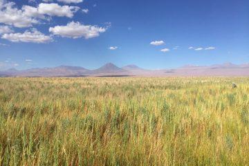 Atacama, Quelque part dans le nord du Chili