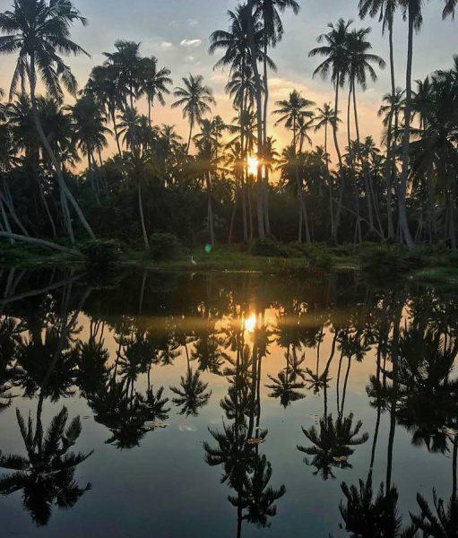 Dans les marais sur la côte de Malabar en Inde