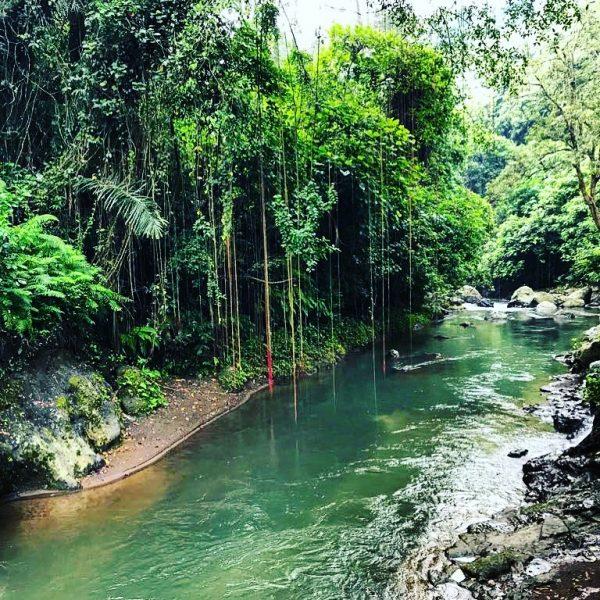 Le parfum enivrant des forêts indonésiennes