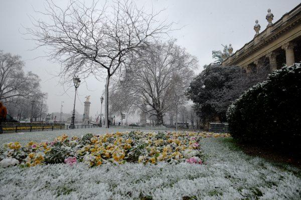 Un parterre de fleurs enneigé devant le Grand Palais