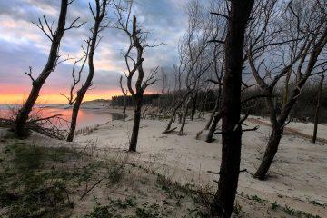 Forêt d'Authie, un secret bien gardé