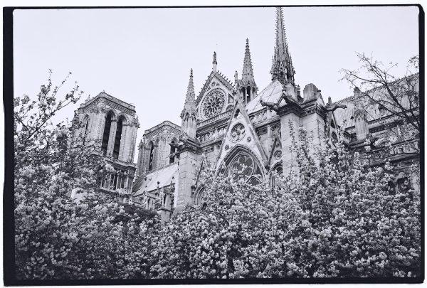 Notre Dame de Paris au printemps