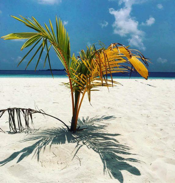Surprenante végétation sur l'archipel des Maldives