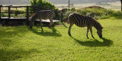 Le paisible Swaziland, l'un des plus petits pays d'Afrique