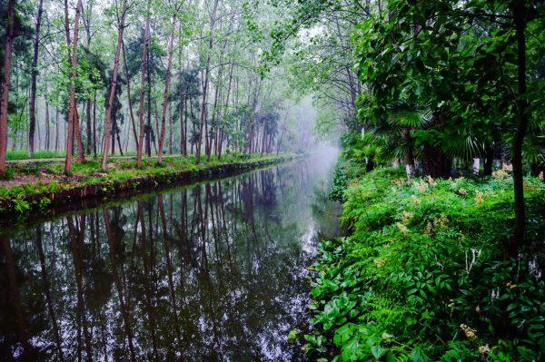 Le parc de Binhu à Hefei