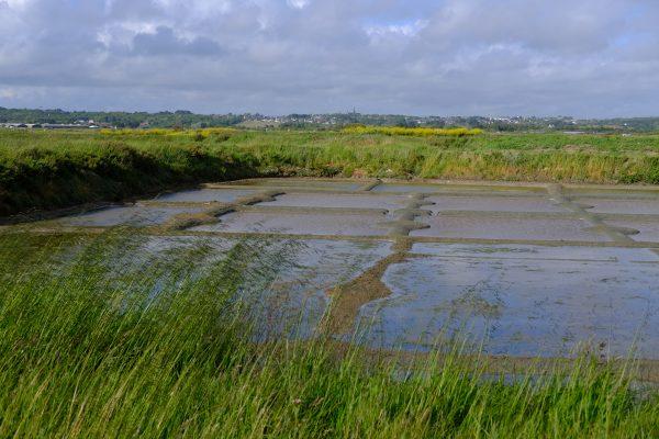 Les marais de Guérande au printemps