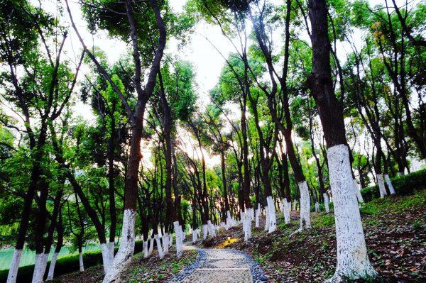 Un espace vert à Hefei, pour reprendre contact avec la nature