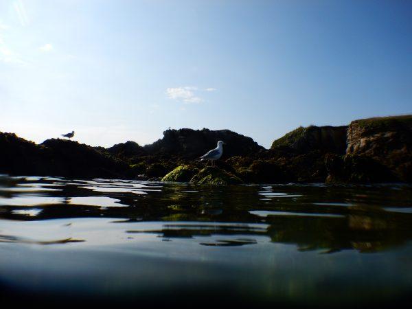 Plongée sous marine à Hoëdic