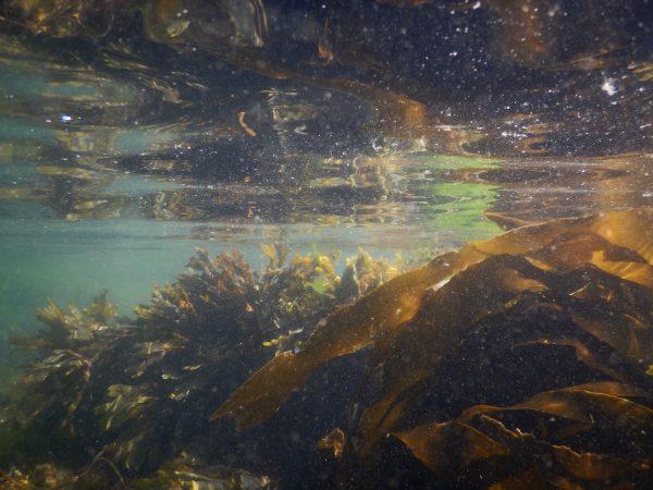 Un moment magique en plongée sous-marine à Hoëdic