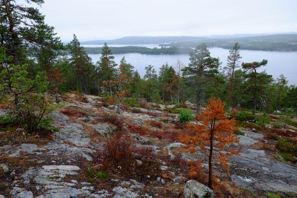 Découverte de la côte Est de la Suède lors d'un road trip
