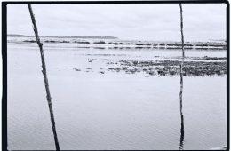 Le grand retour de l'argentique. Reflets autour du Mimbeau, bassin d'Arcachon