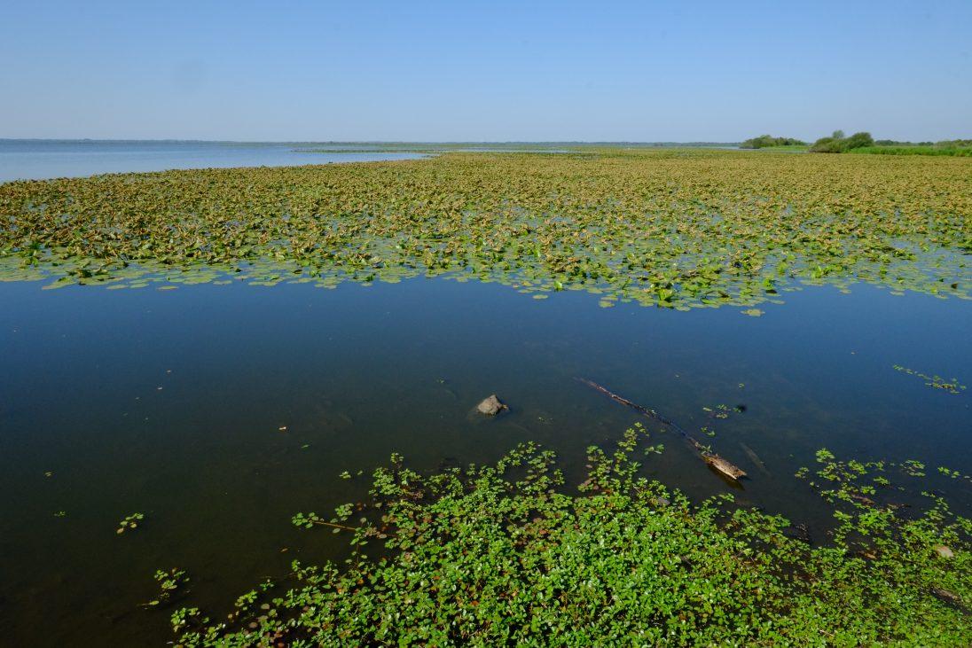 Le lac de Grand Lieu près de Nantes