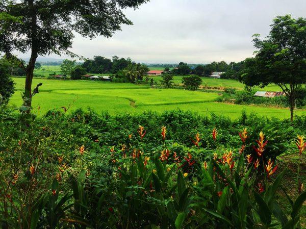 Nan, la nature et les rizières