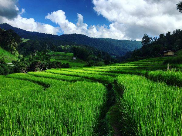 Derrière le petit village de Sob Haad se trouve les rizières et la nature