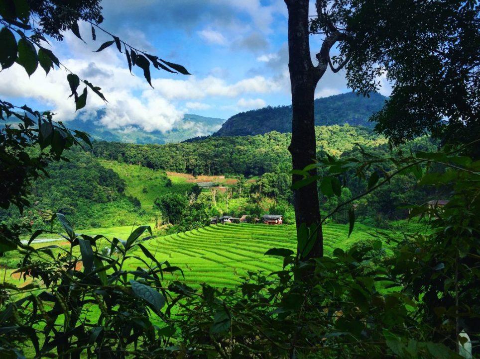 Les rizières en terrasses lors d'une visite dans le nord de la Thaïlande
