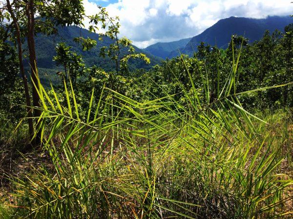 Eco tourisme dans le nord de la Thaîlande