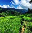 La Thaïlande sur la voie du tourisme durable
